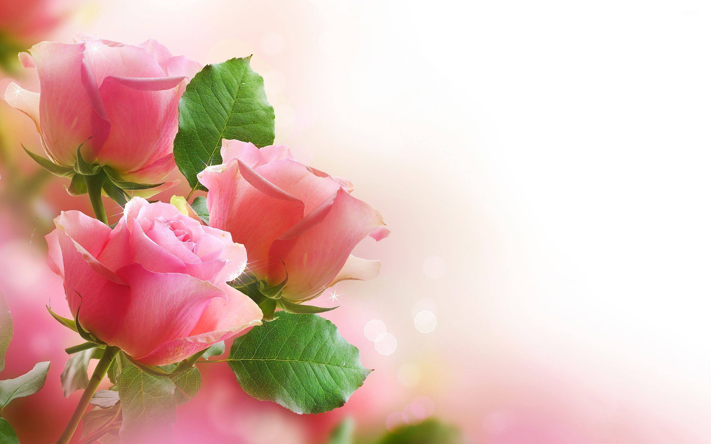 Hd Pink Rose Flowers Wallpaper Full Size Hire Backgrounds For ...