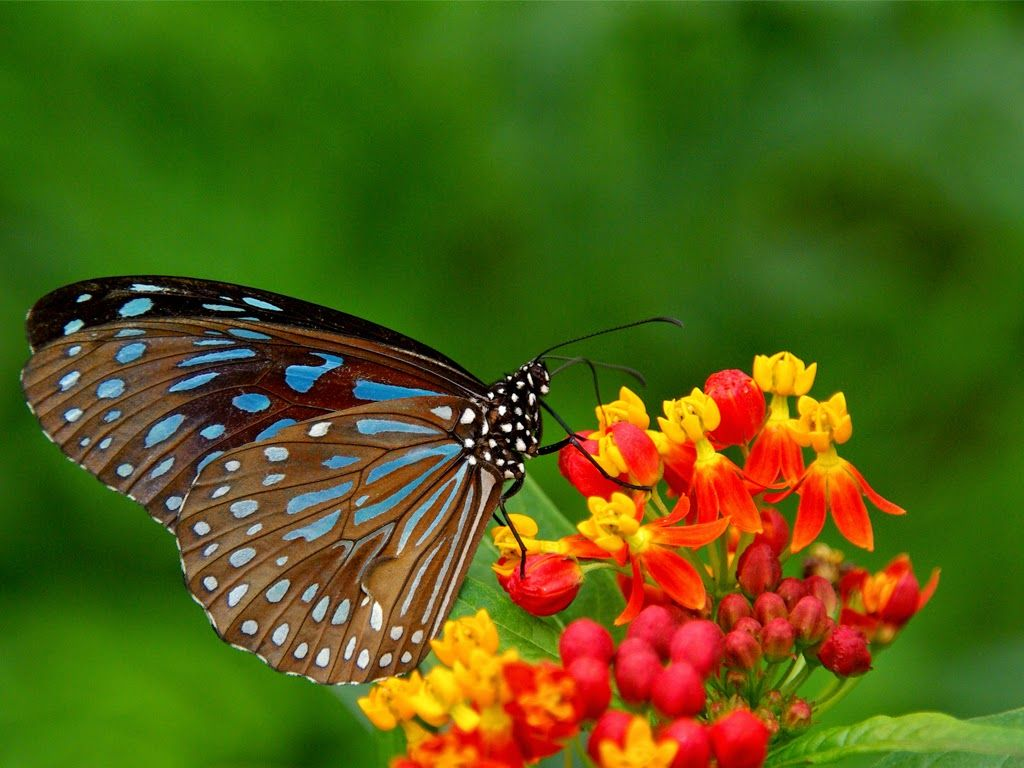 Yellow Flowers and Butterflies Free Wallpaper Desktop | Wallpaper ...