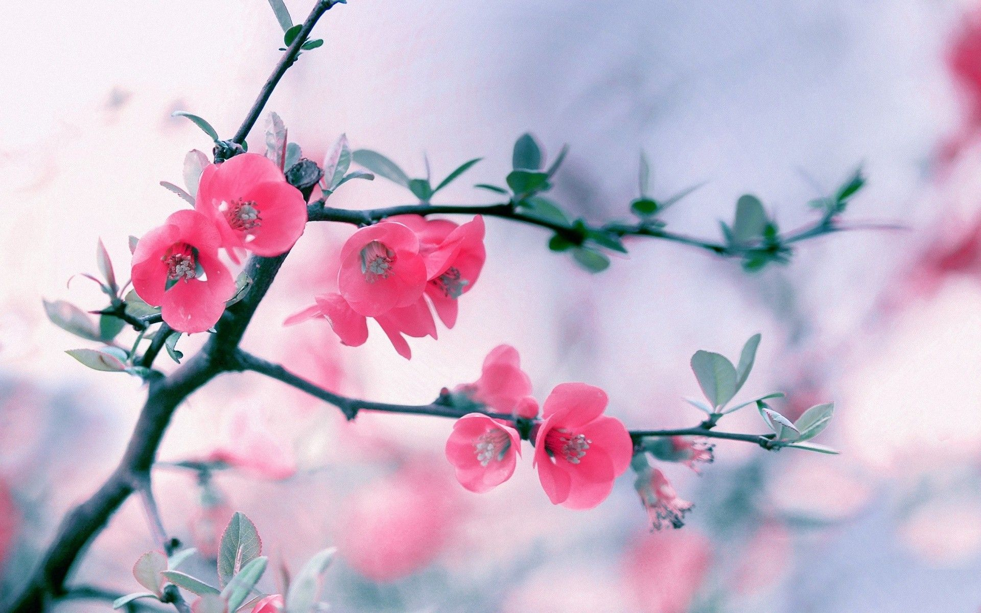 Flower wallpaper ·① Download free cool wallpapers for desktop ...
