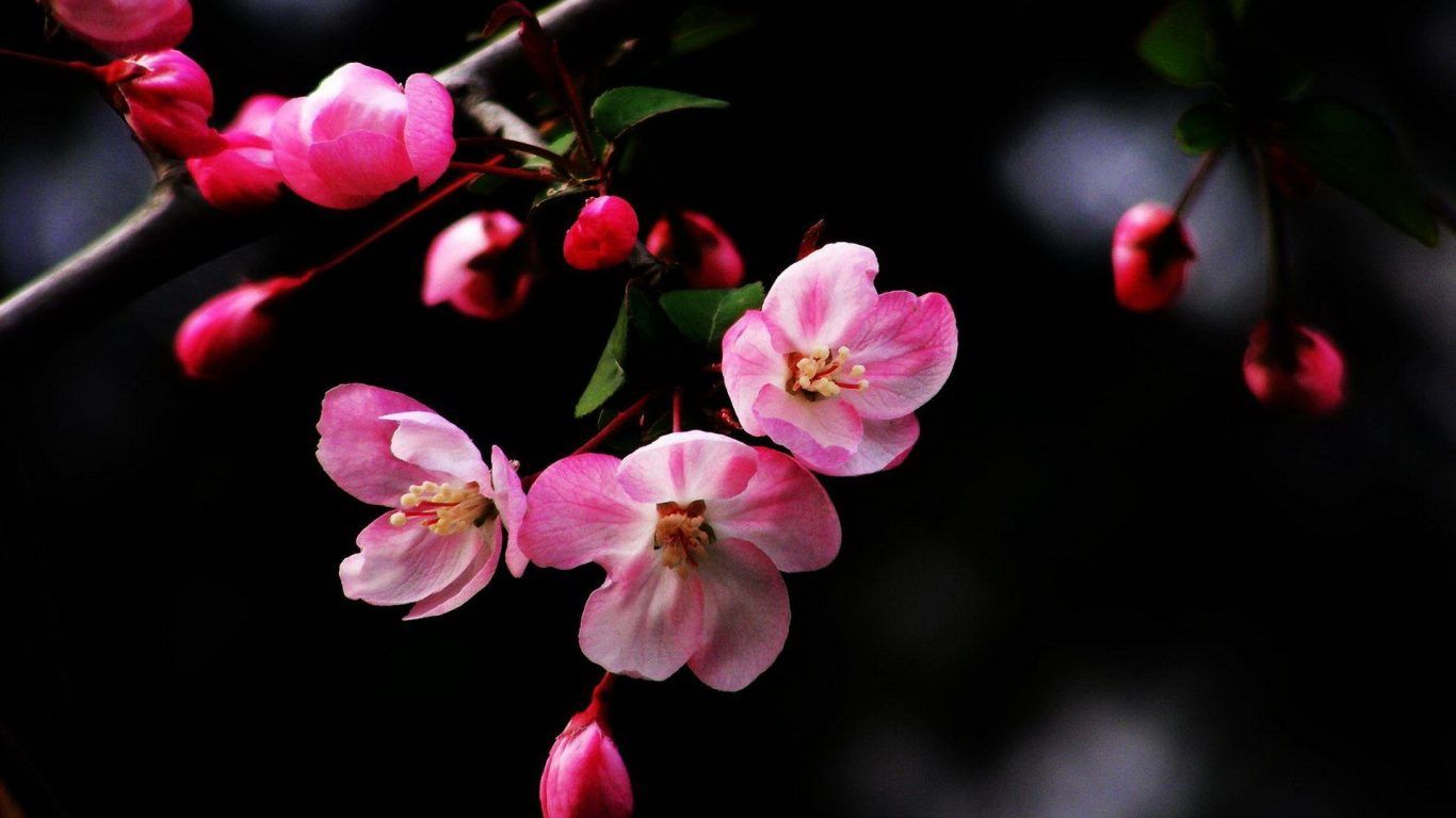 Hd Wallpapers Flowers For Laptop - impremedia.net