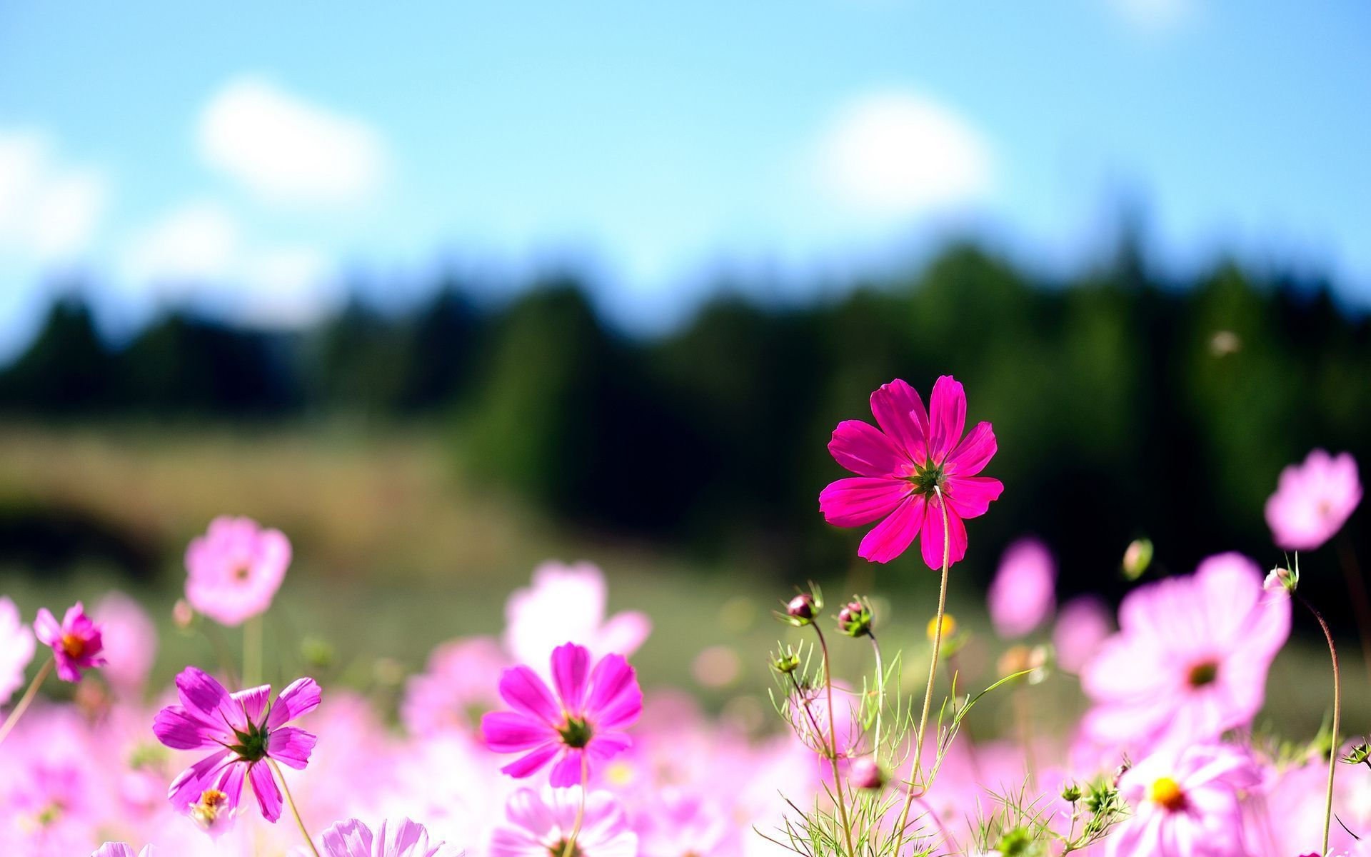 Flower Wallpaper Of Desktop #13246 image pictures | Free Download ...