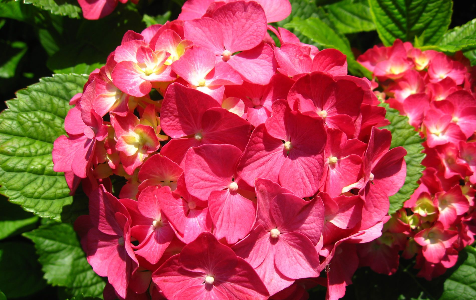 Flower High Definition Wallpaper Free Download - Page 26