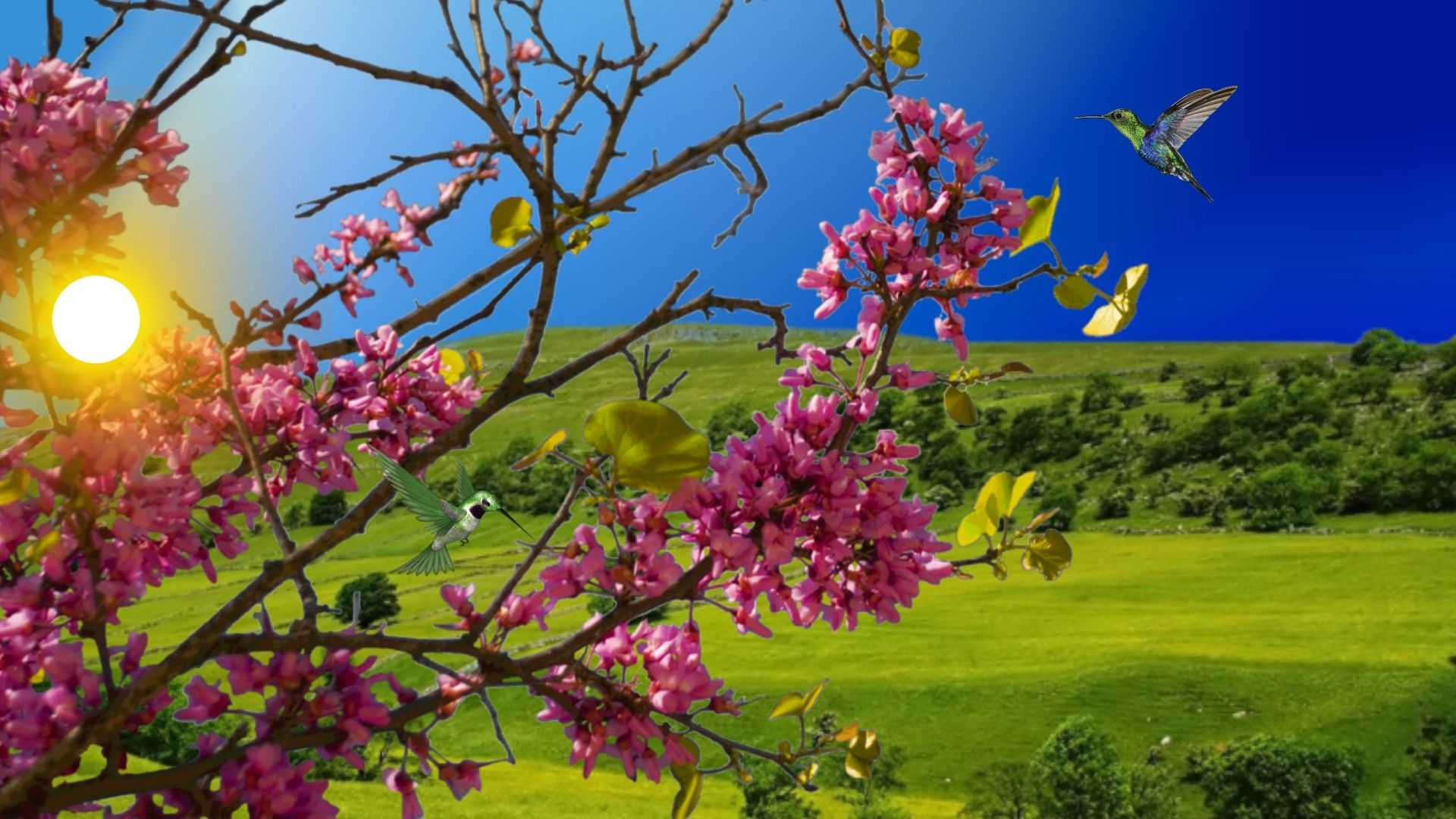 Flower Hummingbird Tree Flowers Day Sunny Spring Hd Wallpapers For ...