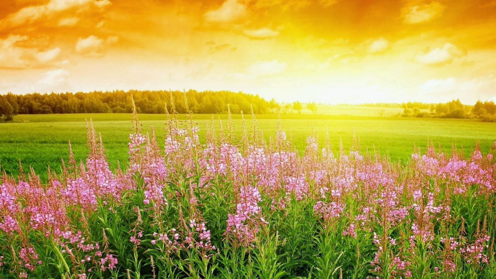 nature hd wallpapers for laptop x free download HD | HD Wallpapers ...