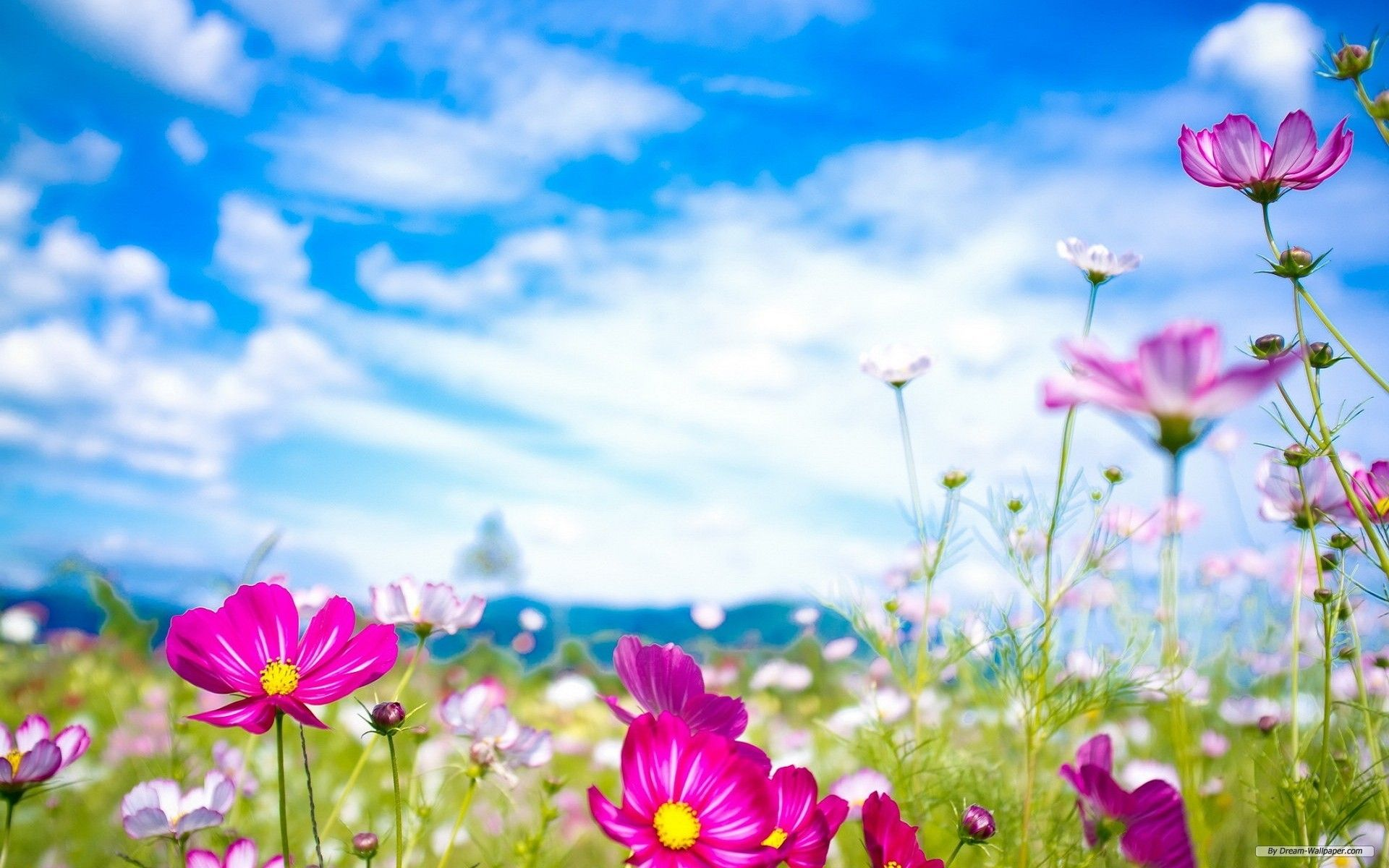 For Your Desktop: Spring Flowers Wallpapers, 43 Top Quality Spring ...