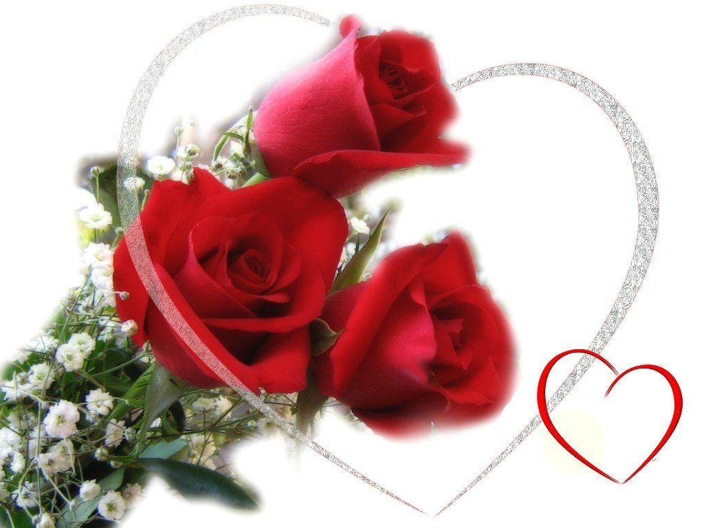 Wallpapers For > Red Rose Love Wallpaper