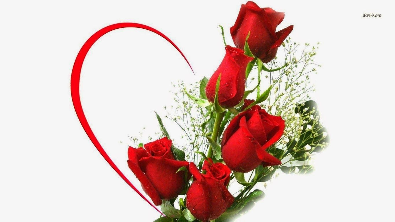knumathise Red Rose I Love You Wallpaper Images | wallpapers ...
