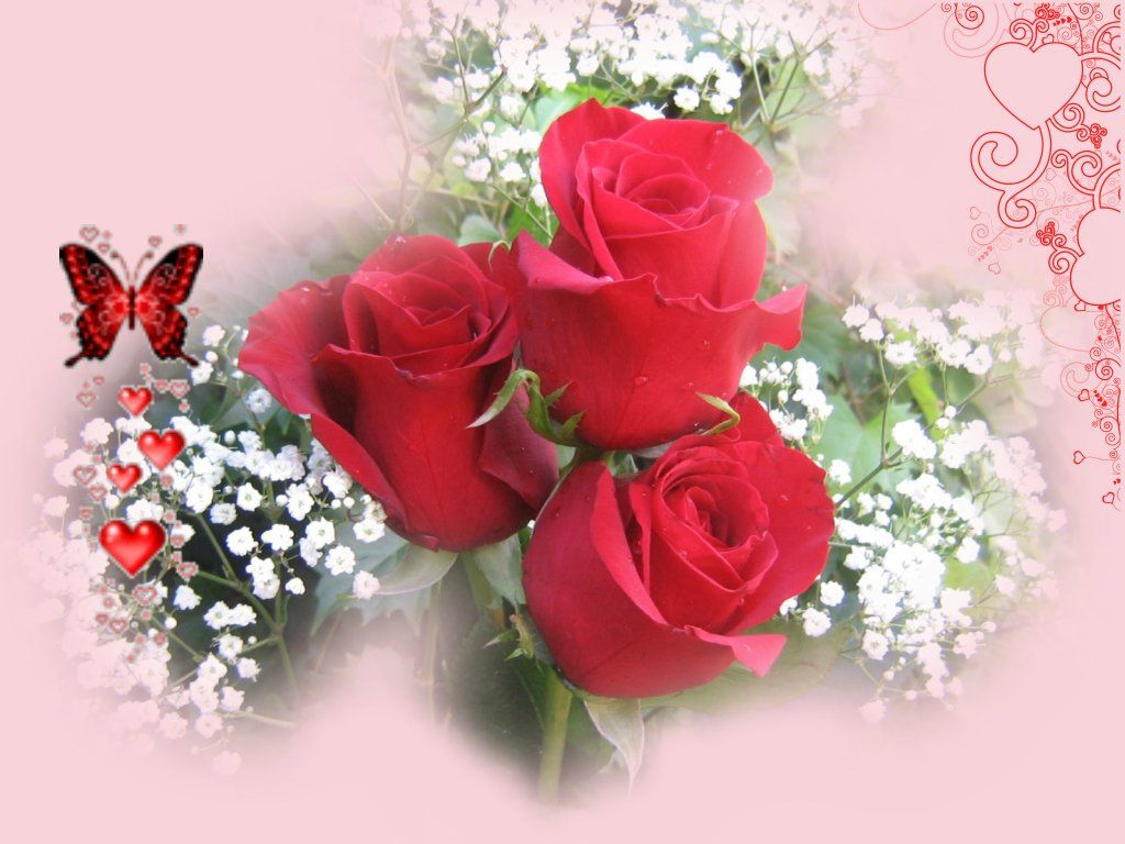 Red Rose Background 20 Background Wallpaper - HdFlowerWallpaper.com