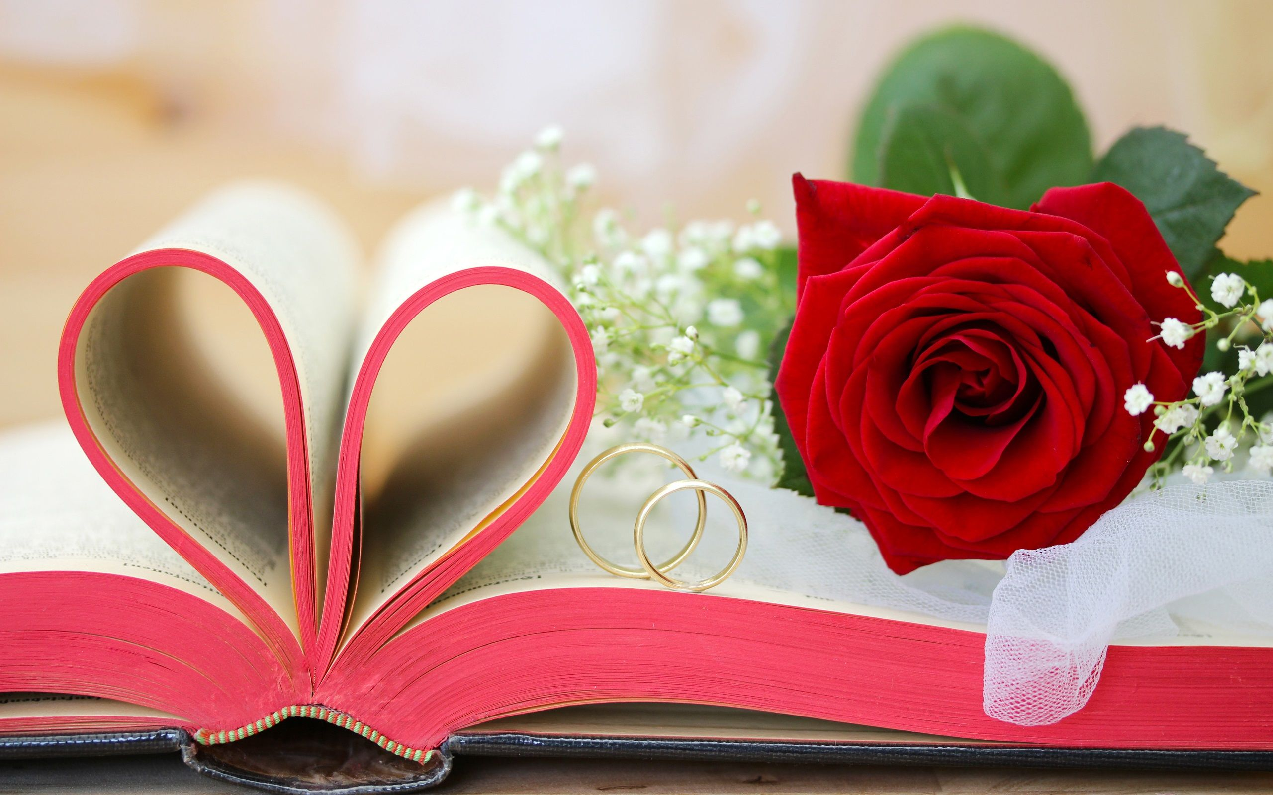 Red flowers, roses, Valentine's Day, book, love hearts, rings ...