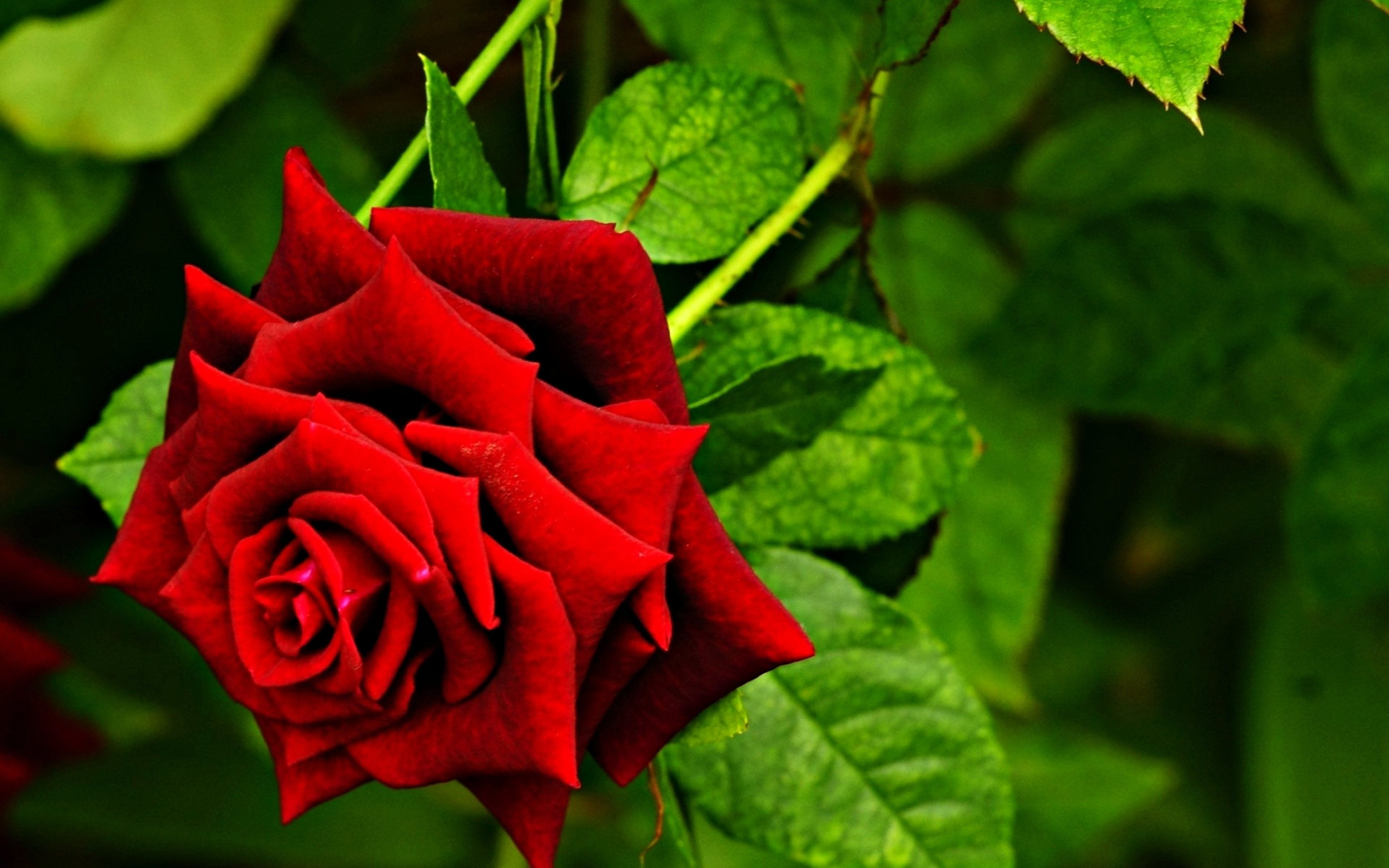 Photos Of Beauty Flowers Lovely Hd Flower Love Naturered Very Red ...