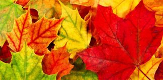 Autumn Leaves Hd Wallpapers Wallpaper Cave.jpg