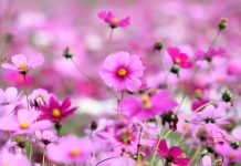 Flowers Wallpapers For Desktop Backgrounds Full Screen.jpg