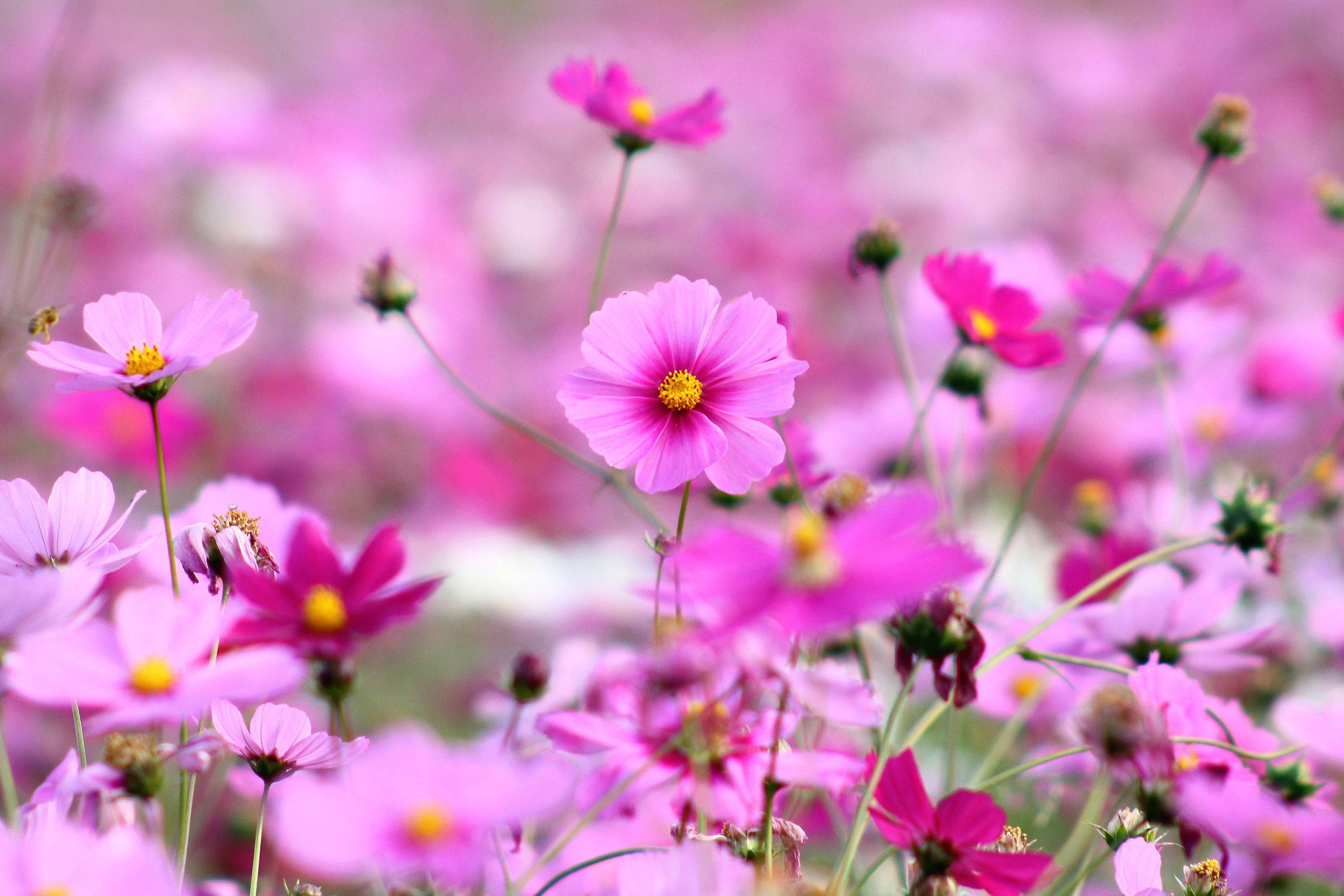 Hd Wallpapers For Pc Full Screen Flower Free Pictures On Greepx