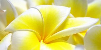 Flowers Wallpapers For Desktop Full Size.jpg