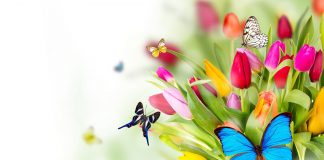Flowers With Butterfly Wallpapers Hd.jpg