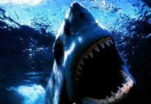 Hd Shark Wallpapers Wallpaper Cave.jpg
