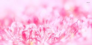 Pink Flowers Wallpapers.jpg