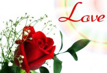 Red Flower Wallpapers Love.jpg