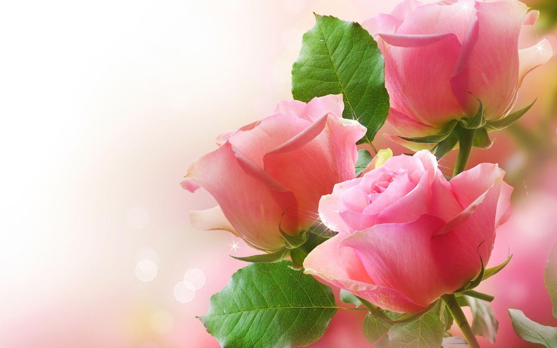 Wallpaper Flower Rose Love HD Wallpapers Pictures | HD Wallpaper Photo