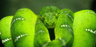 Snake Wallpapers Wallpaper Cave.jpg
