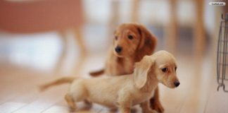 Wallpapers Of Puppies Wallpaper Cave.jpg