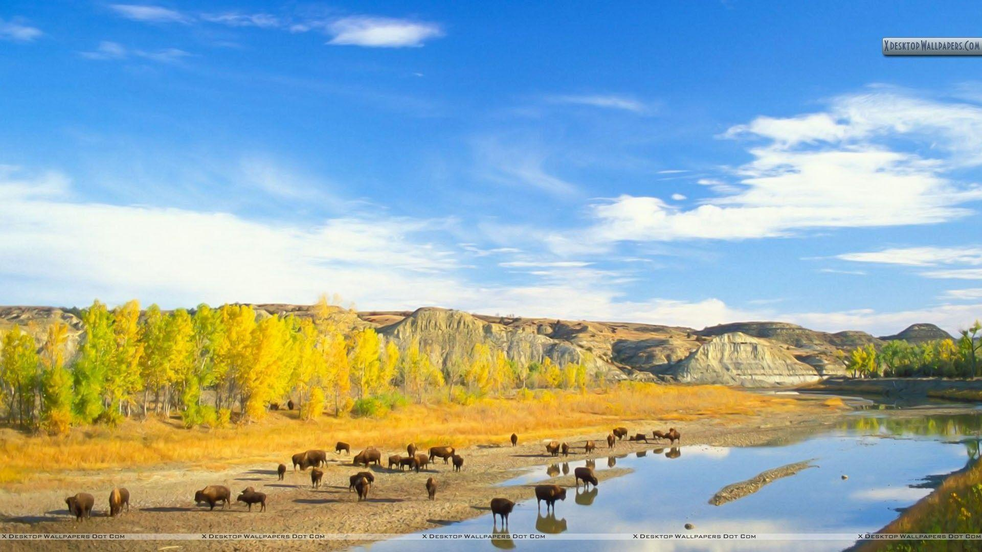 Bison Little Missouri River Theodore Roosevelt Wallpapers