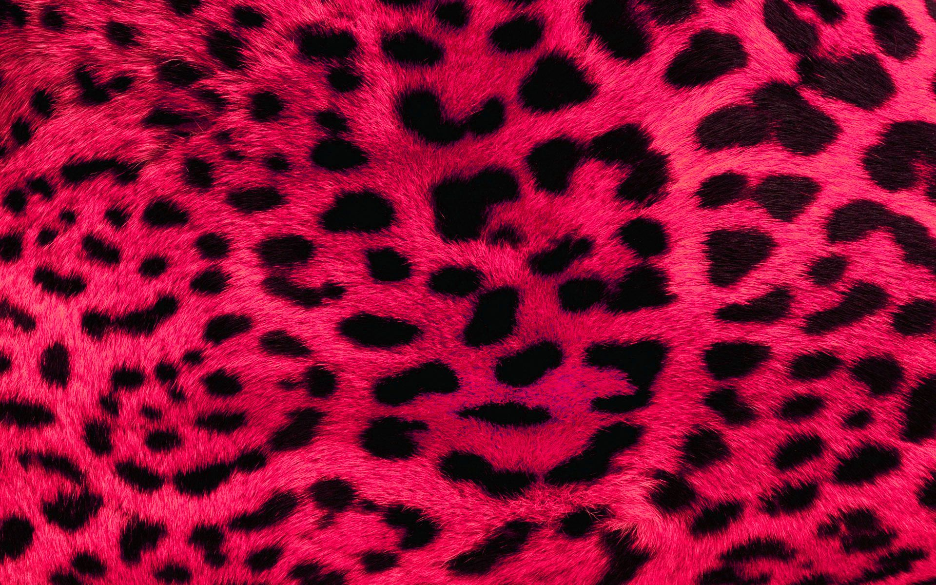 Cheetah Print Wallpapers Beautiful Zebra Print Hd Wallpapers