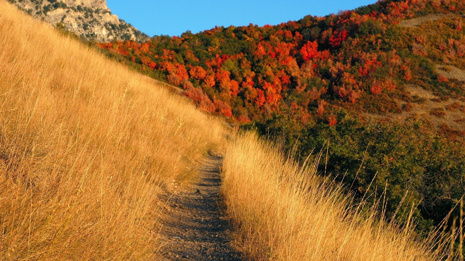 Group of Appalachian Mountains Wallpapers Free