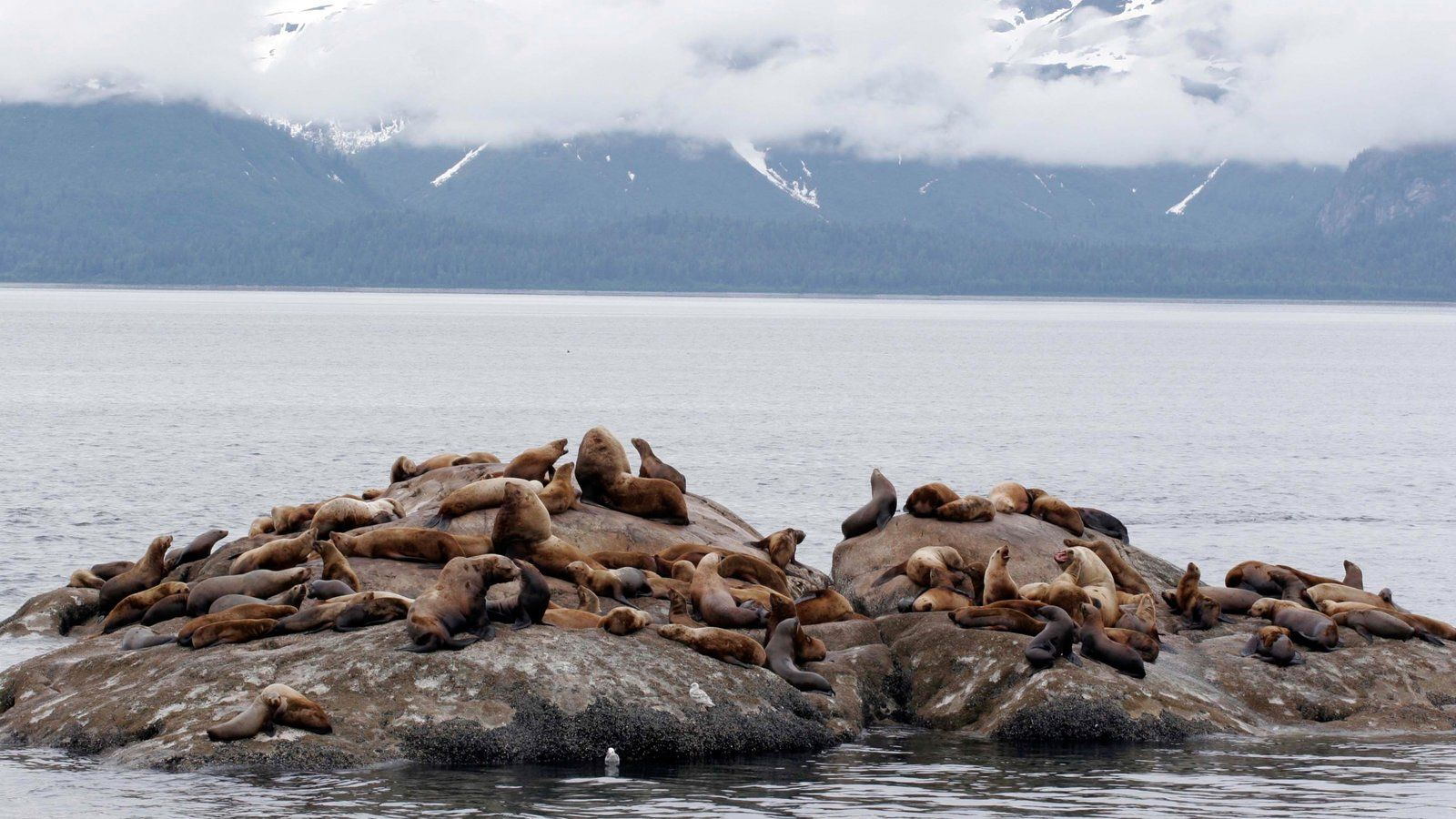 Glacier Bay National Park Pictures: View Photos & Image of