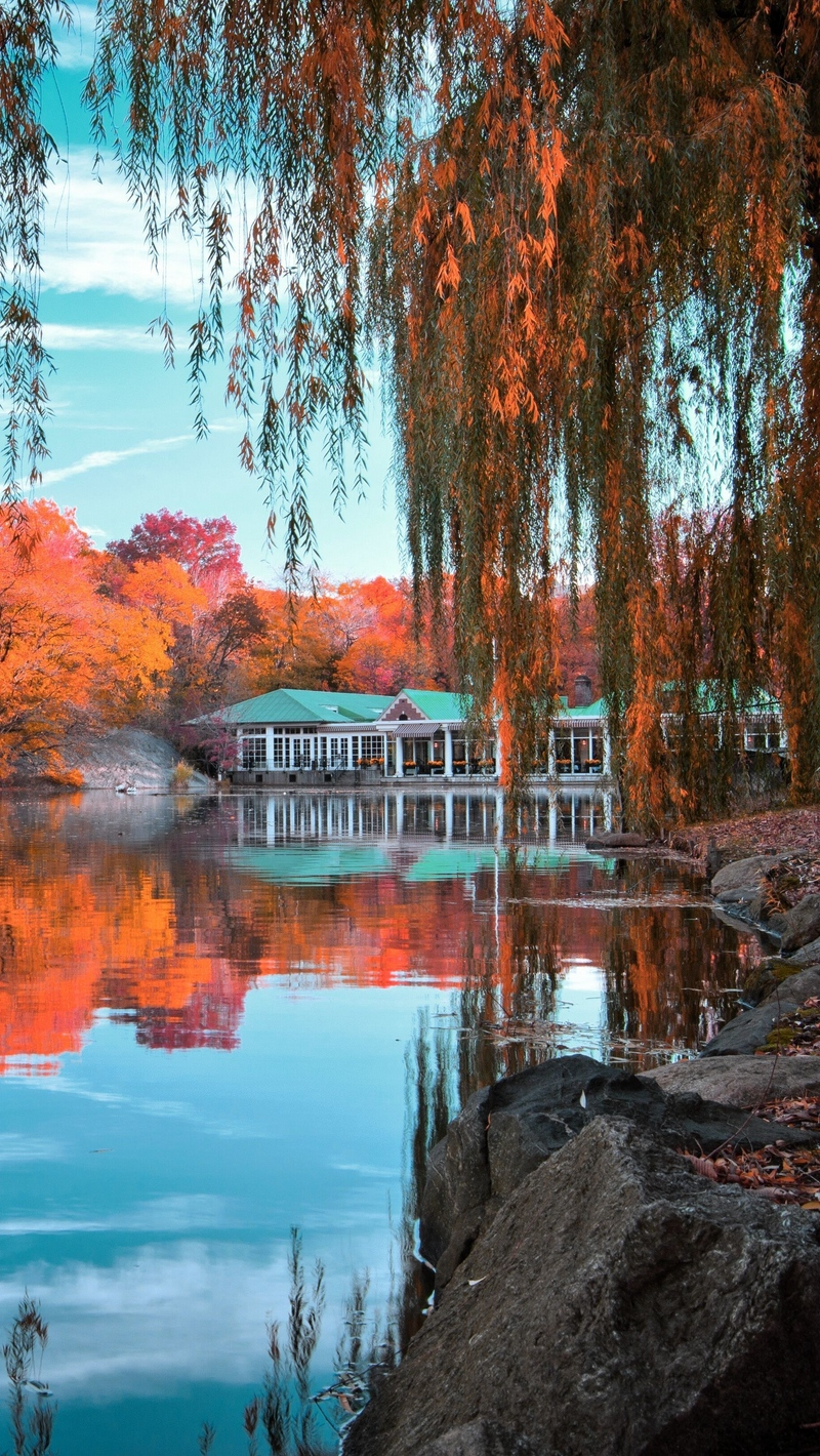 Download wallpapers 800x1420 central park, new york, autumn