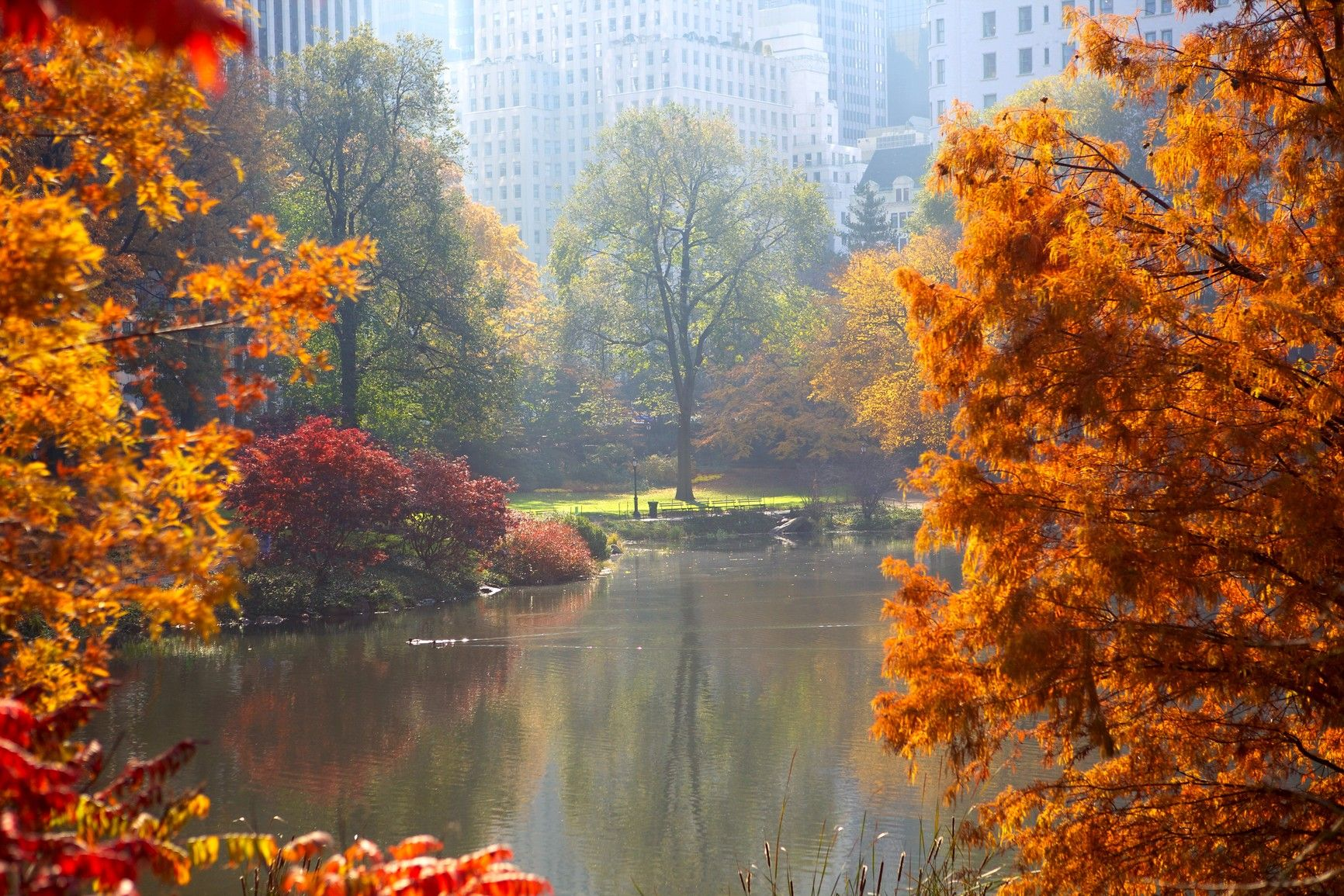 60+ Central Park Fall Wallpapers