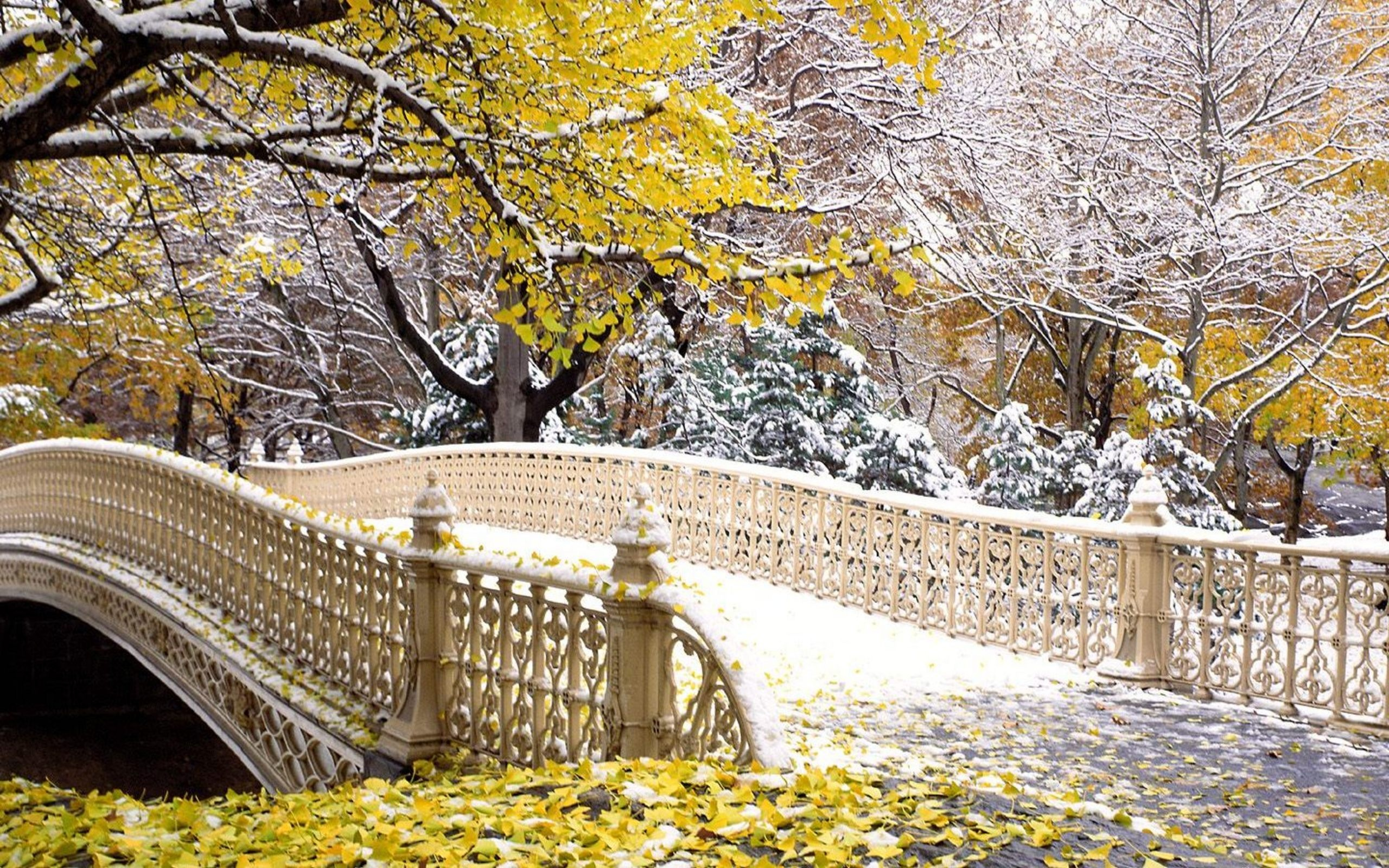 Fall Central Park New York Wallpapers in jpg format for free download