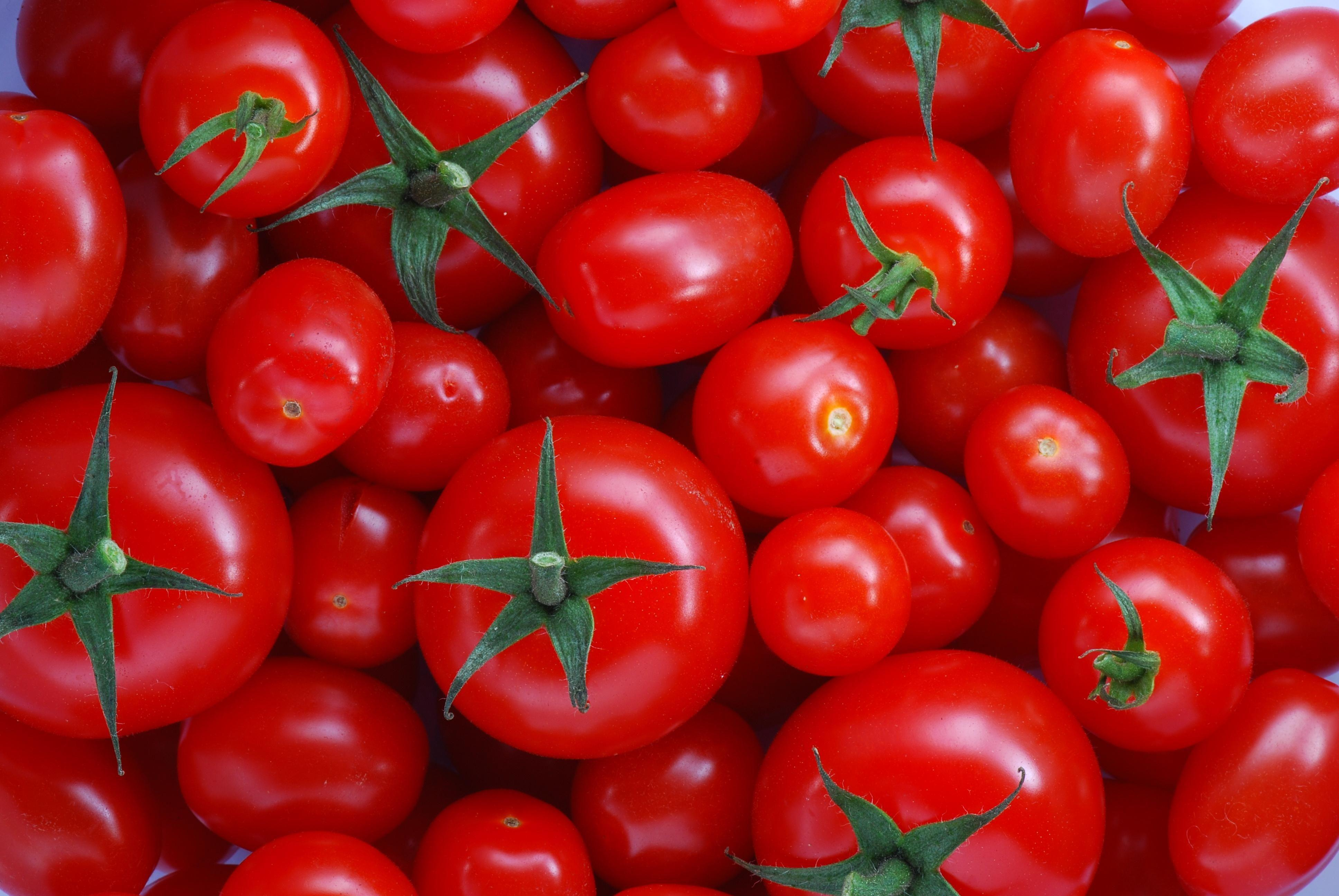 Tomato Wallpapers HD Backgrounds, Image, Pics, Photos Free