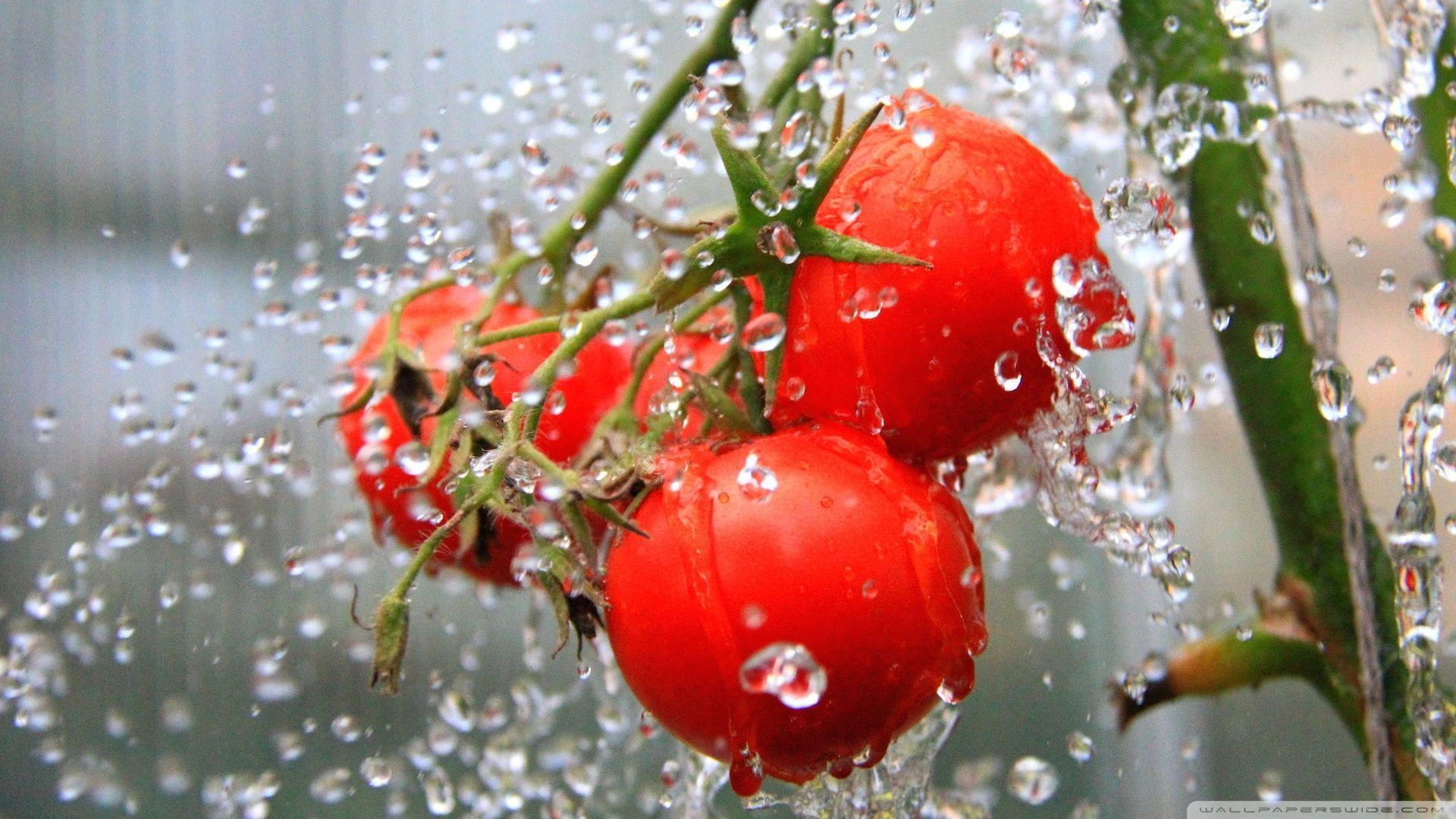 The Tomato Shower HD desktop wallpapers : High Definition