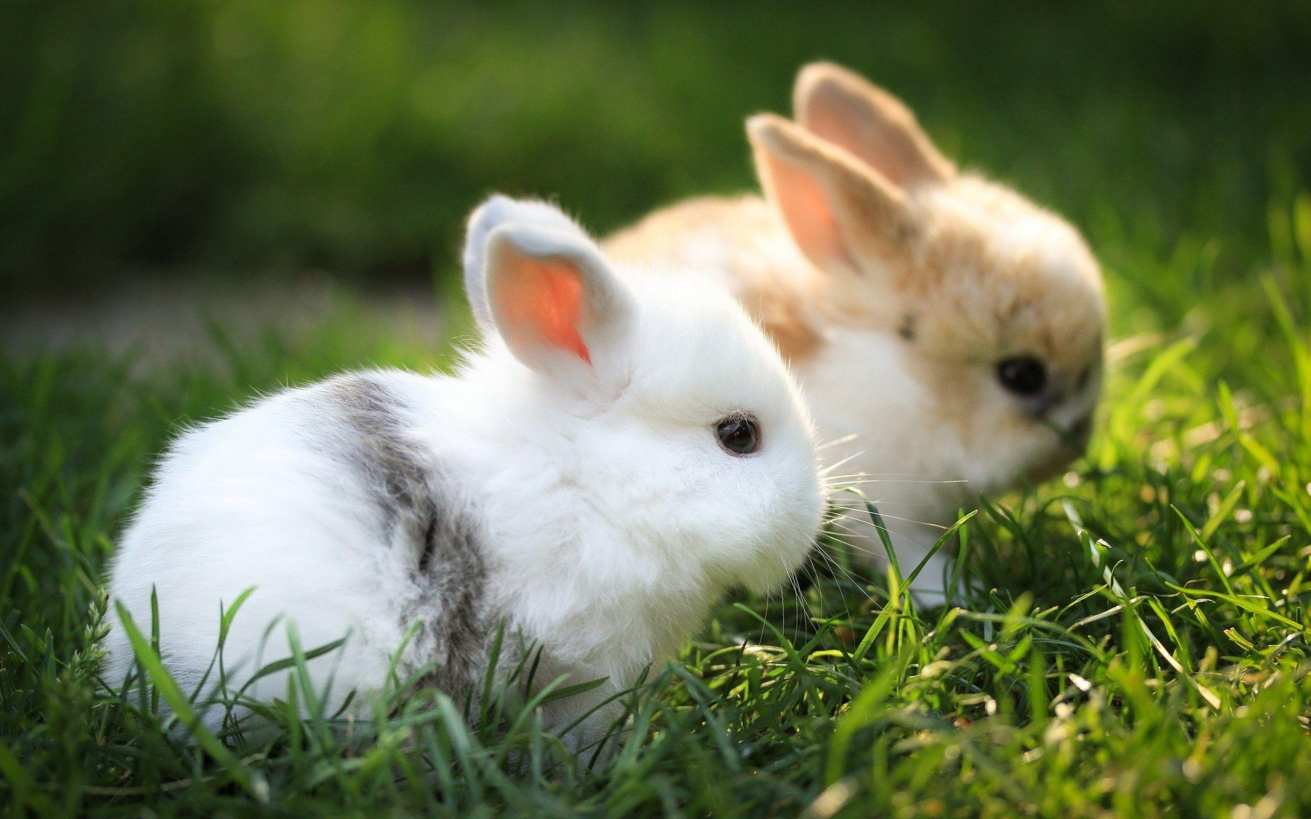 Baby Bunny Cool HD Wallpapers Picture on ScreenCrot