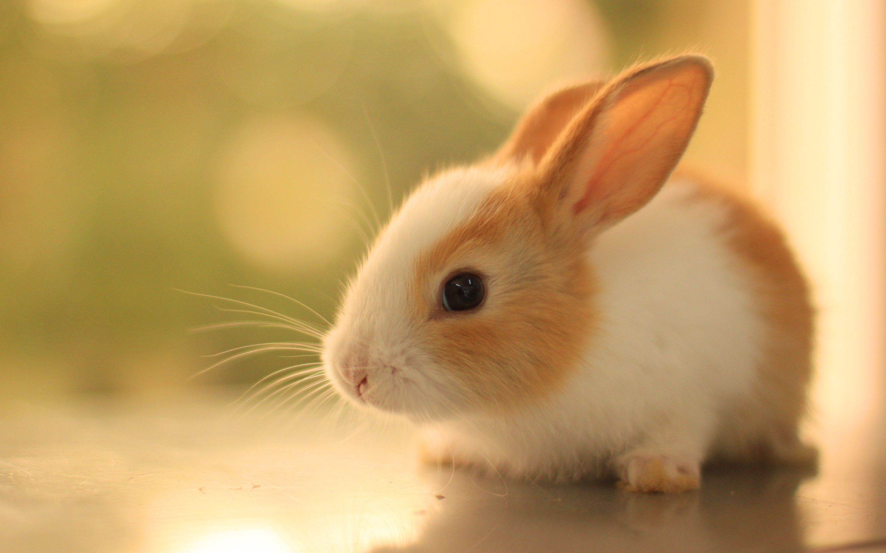 Rabbits image Bunnies HD wallpapers and backgrounds photos