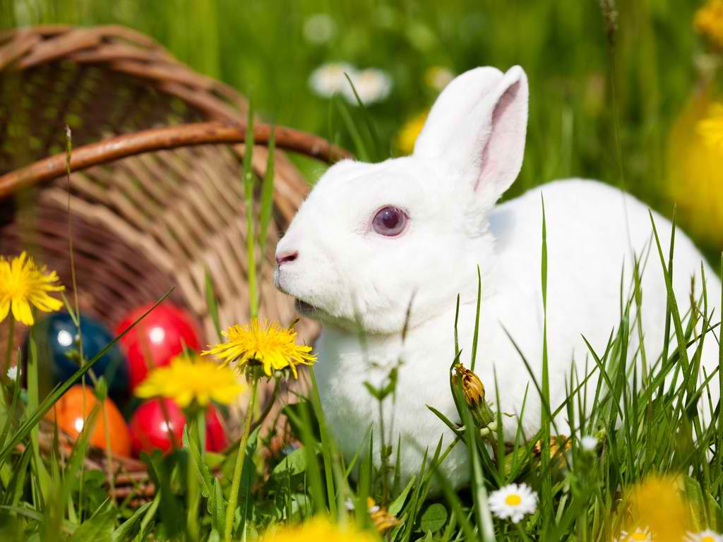 Cute Baby Rabbits Widescreen HD Wallpapers 9889