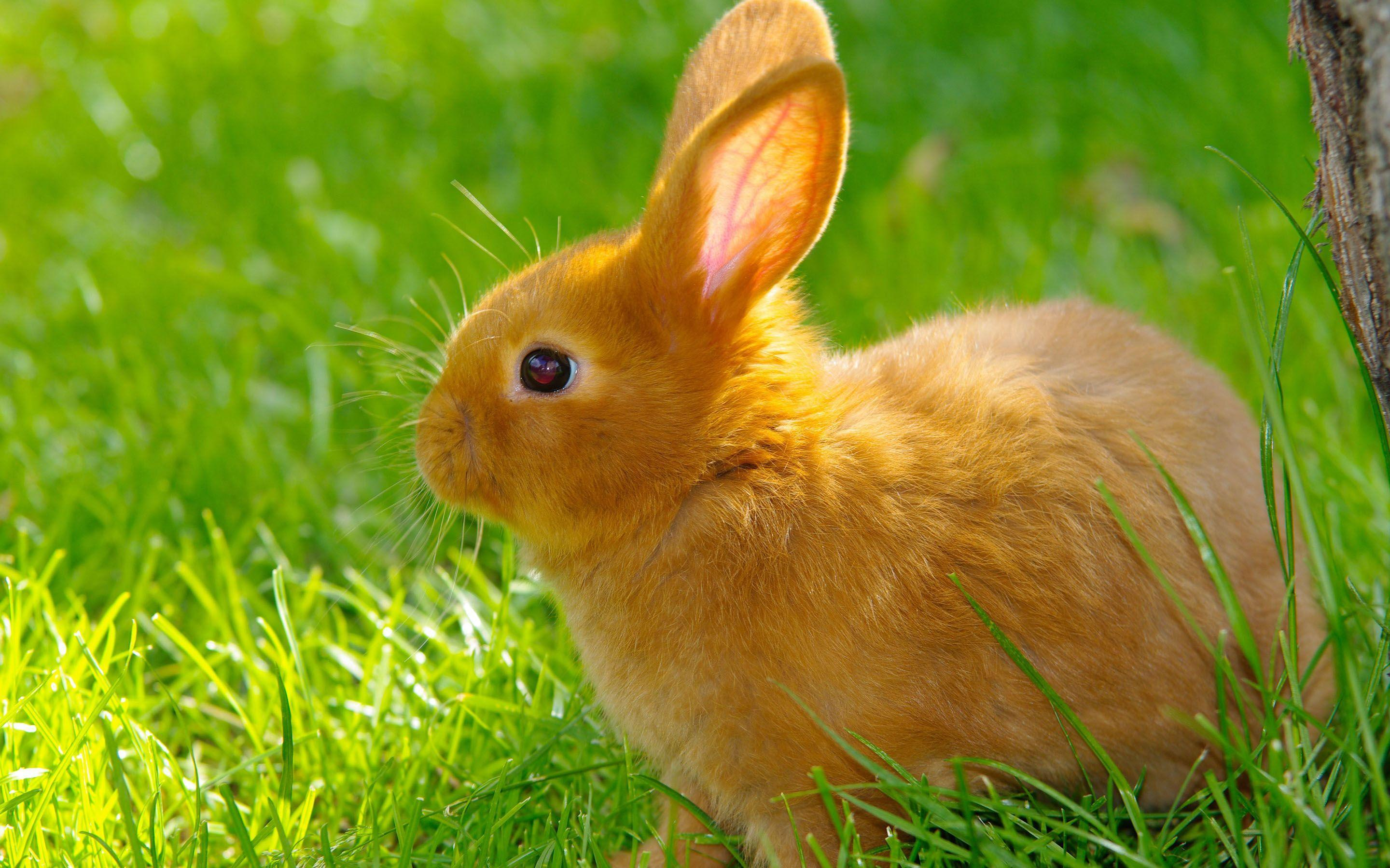Cute Baby Rabbits Wallpapers Designs 9790