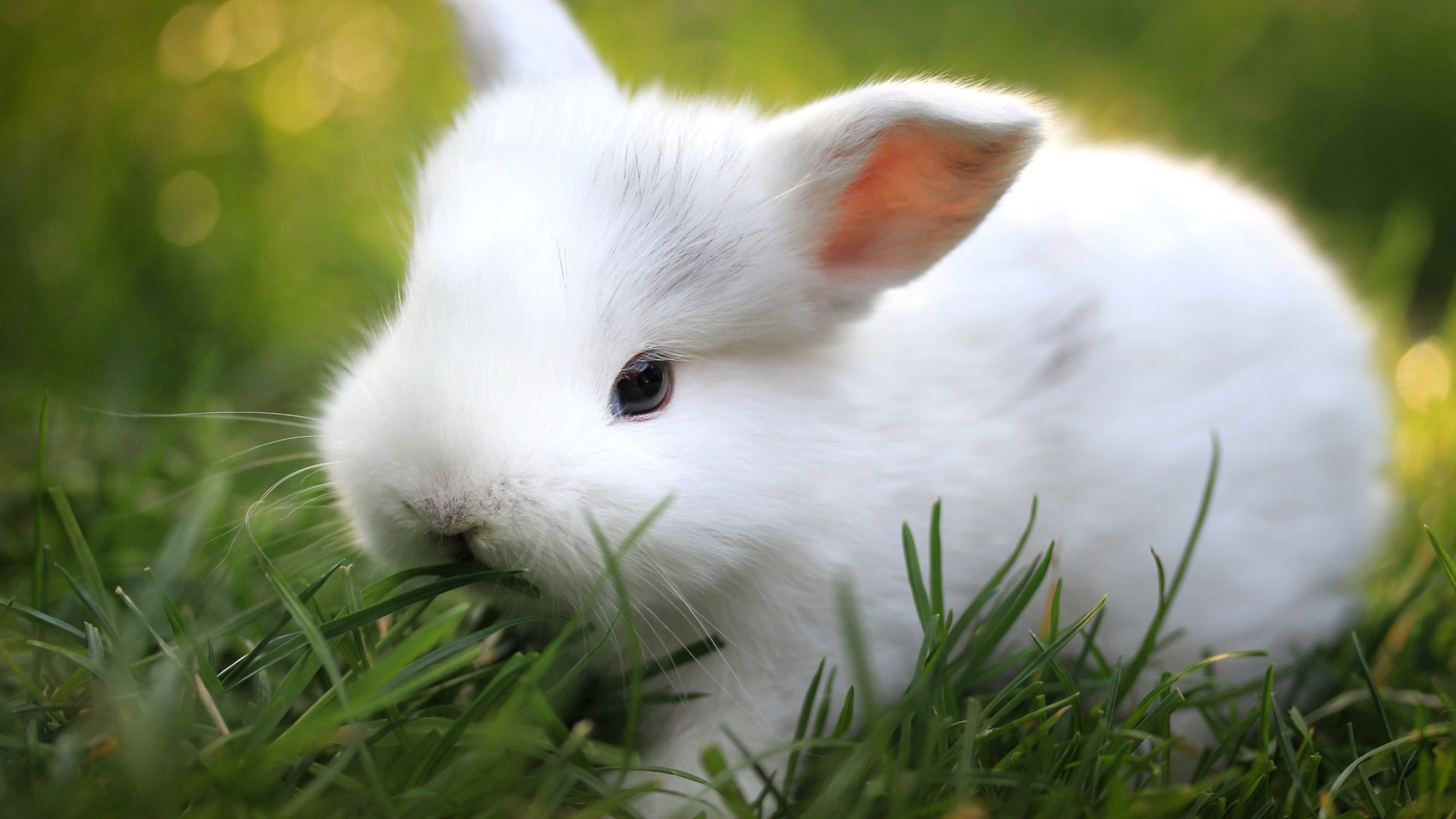 Free Cute Bunny Wallpapers Wide « Long Wallpapers