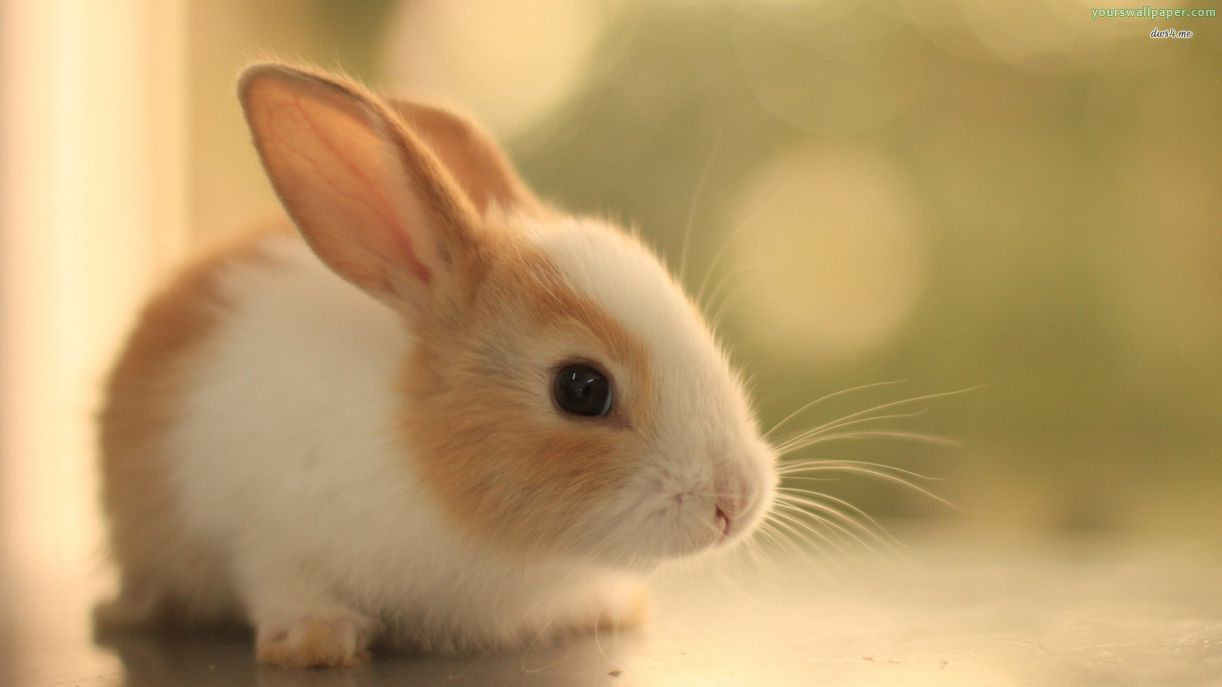 Cute Baby Rabbits Backgrounds Wallpapers 9805