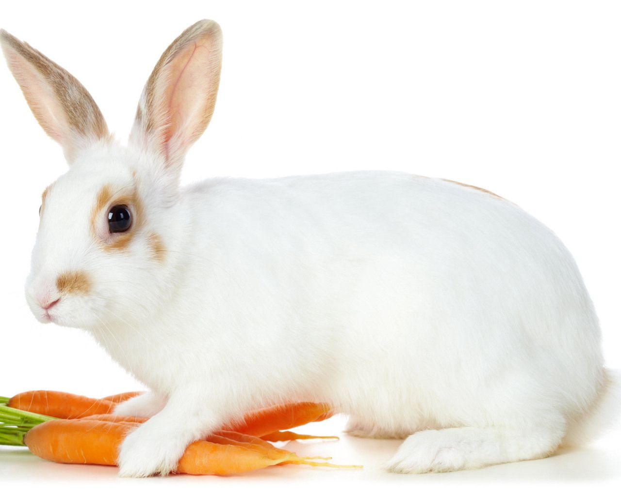 Cute Rabbit Wallpapers Clean White