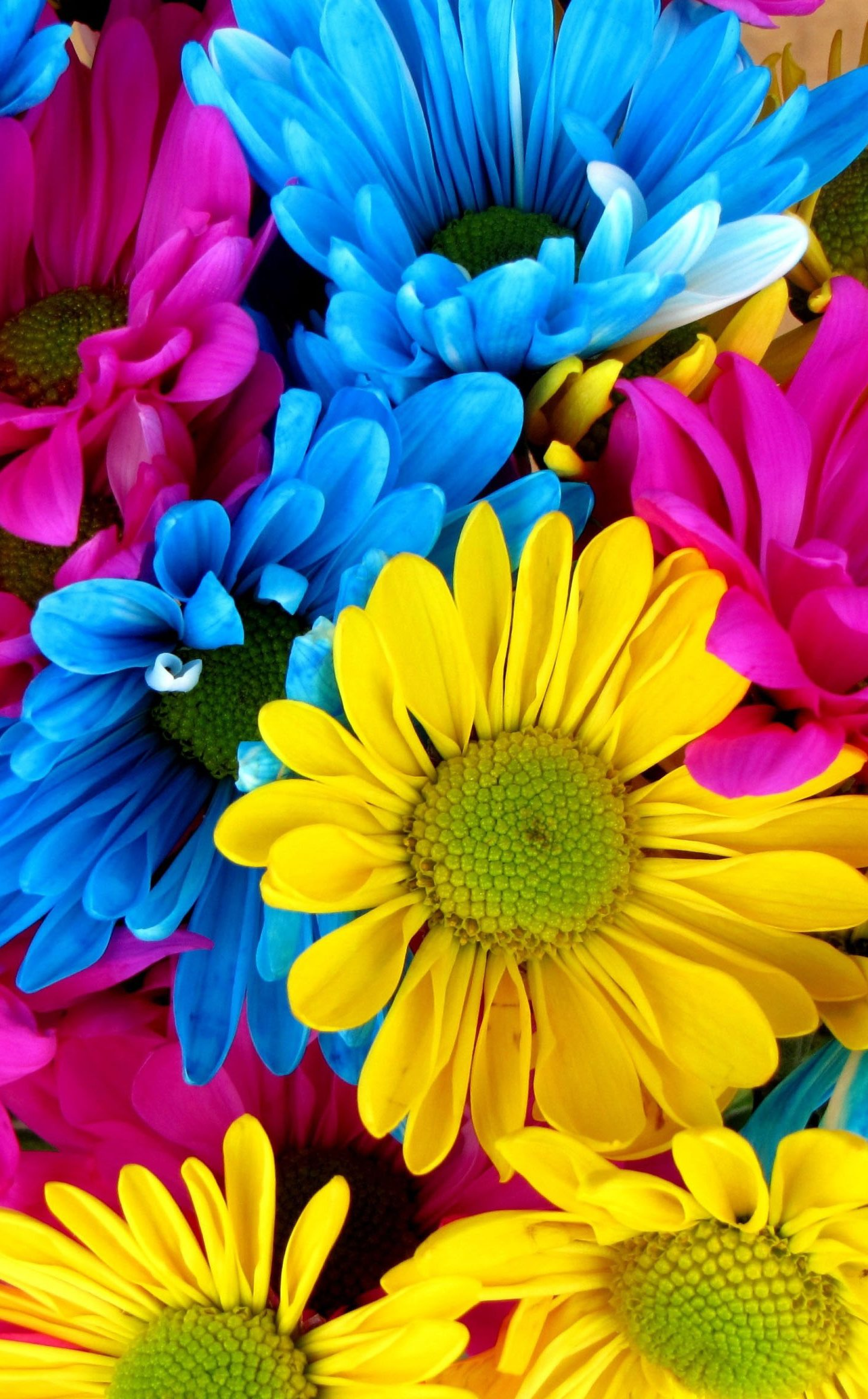 Flowers Colorful Blue Yellow Pink 4K Wallpapers