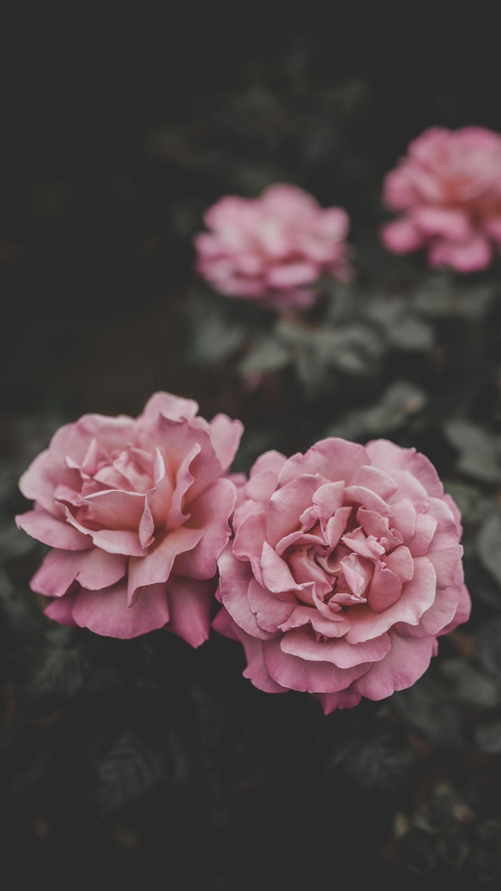 4K Flower Wallpapers