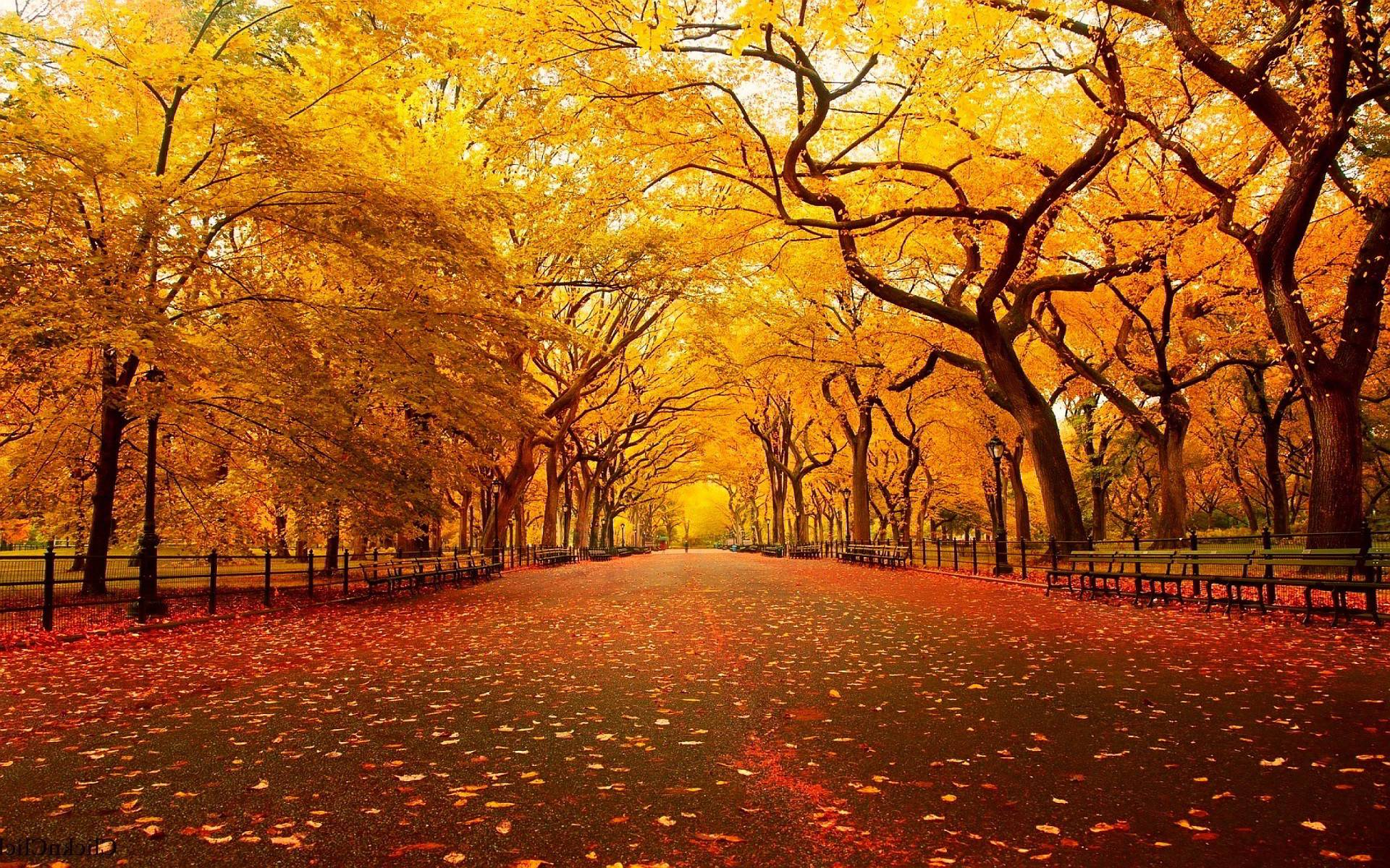 Wallpapers HD Cool Backgrounds Autumn, Wallpapers, HD Wallpapers