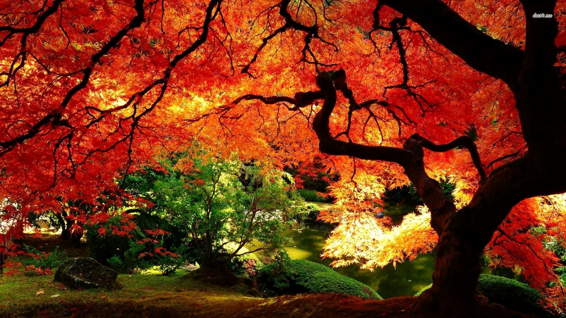 Cartoon Falling Leaves Lovely 75 Fall Leaves Wallpapers On