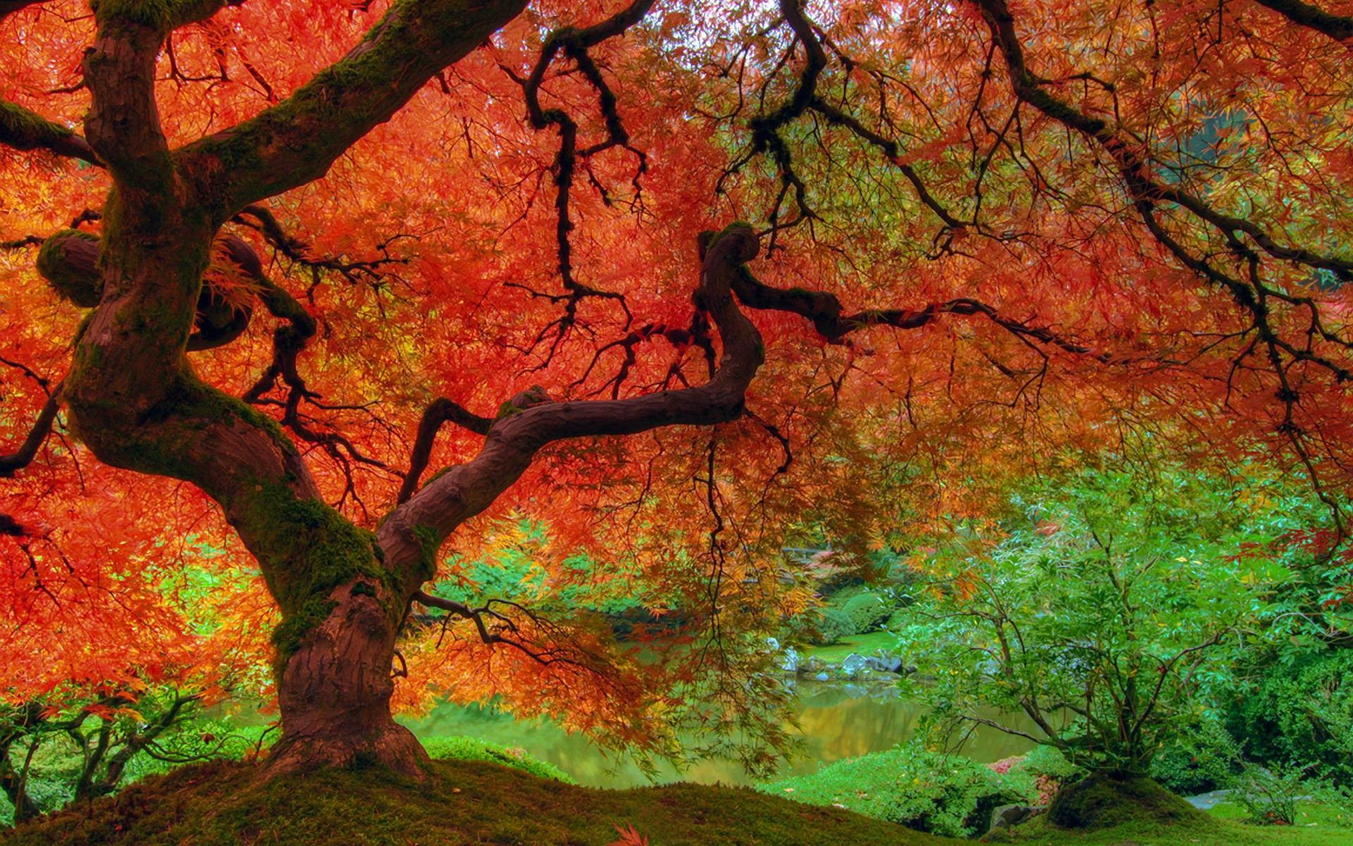 Fall Color Wallpapers