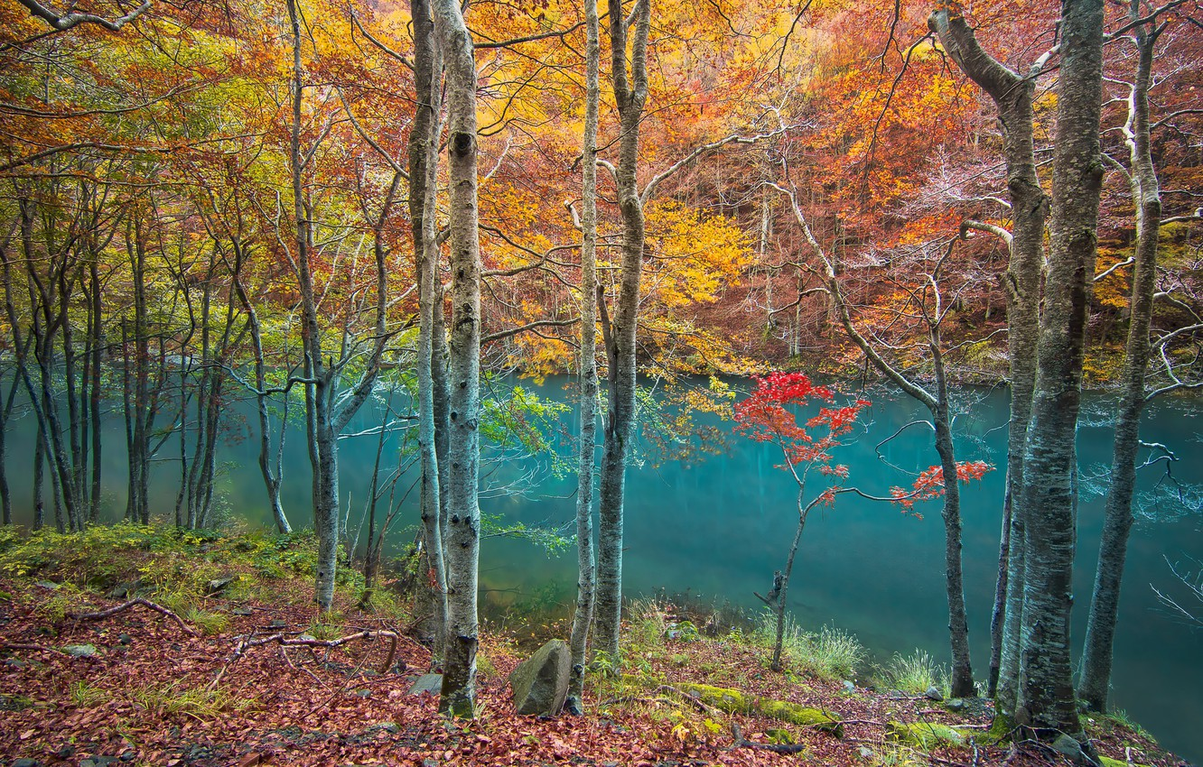 Wallpapers forest, river, trees, water, autumn, leaves