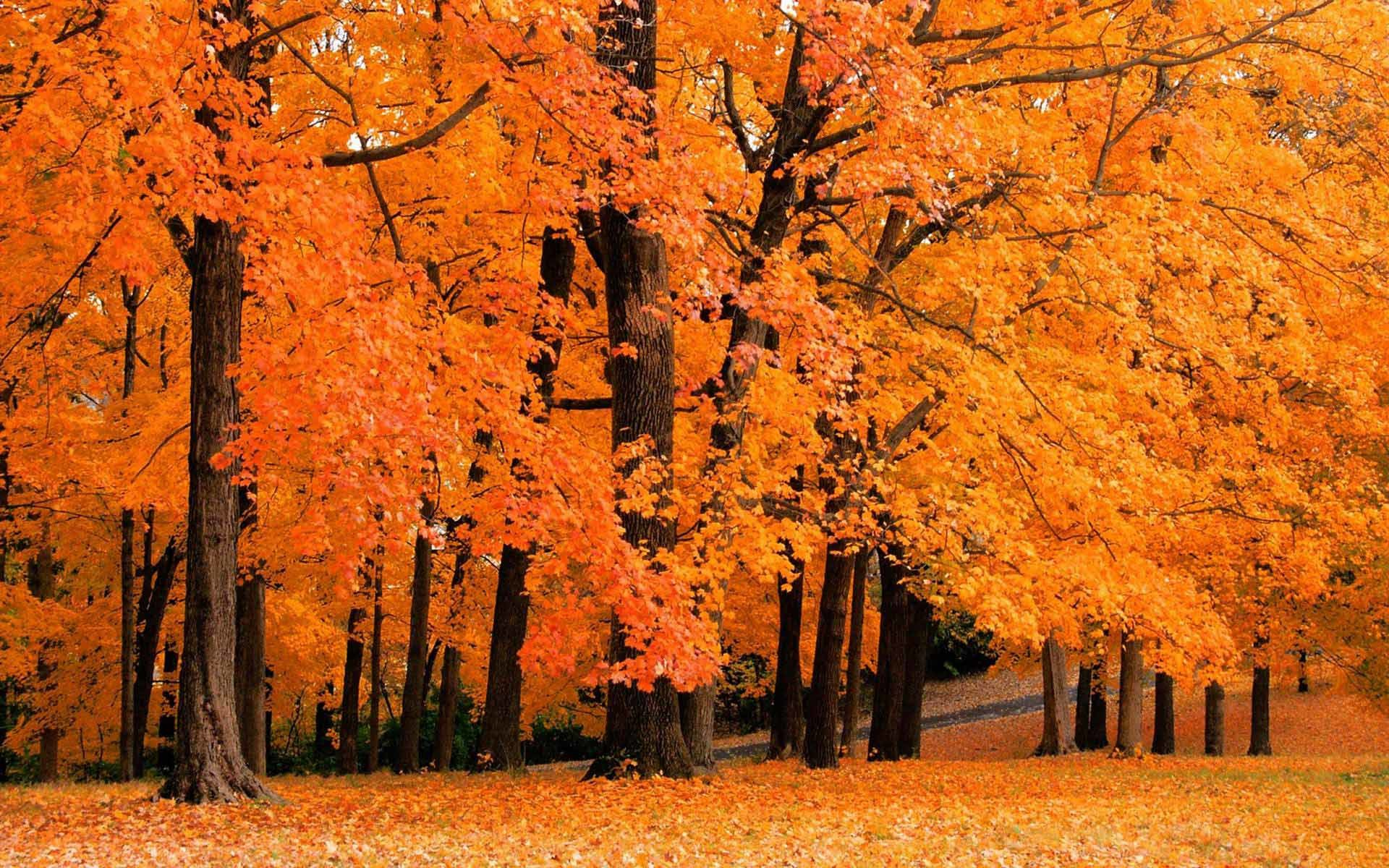 HD Fall Colours Wallpapers