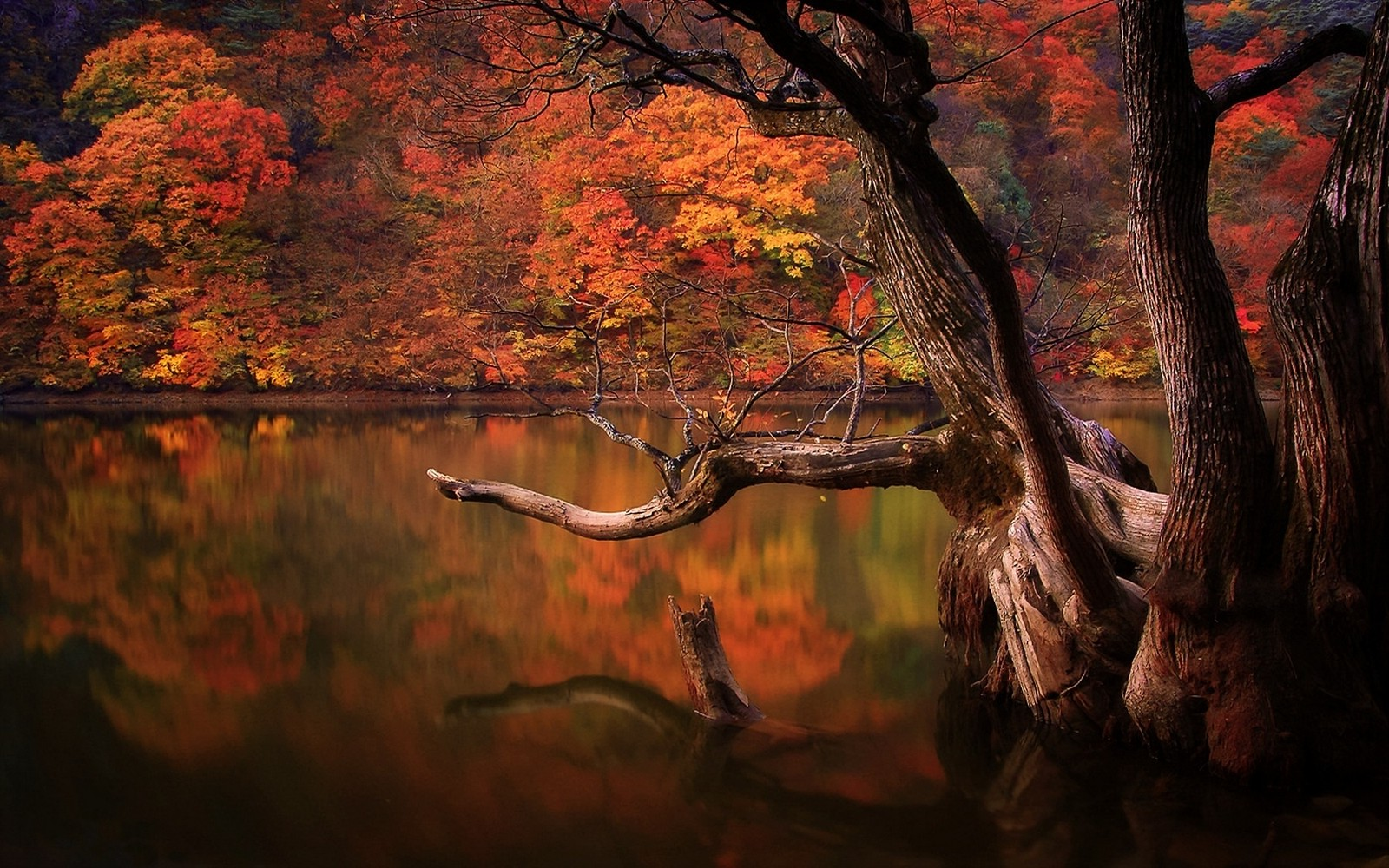 lake, Fall, Forest, Dead Trees, Reflection, Nature, South
