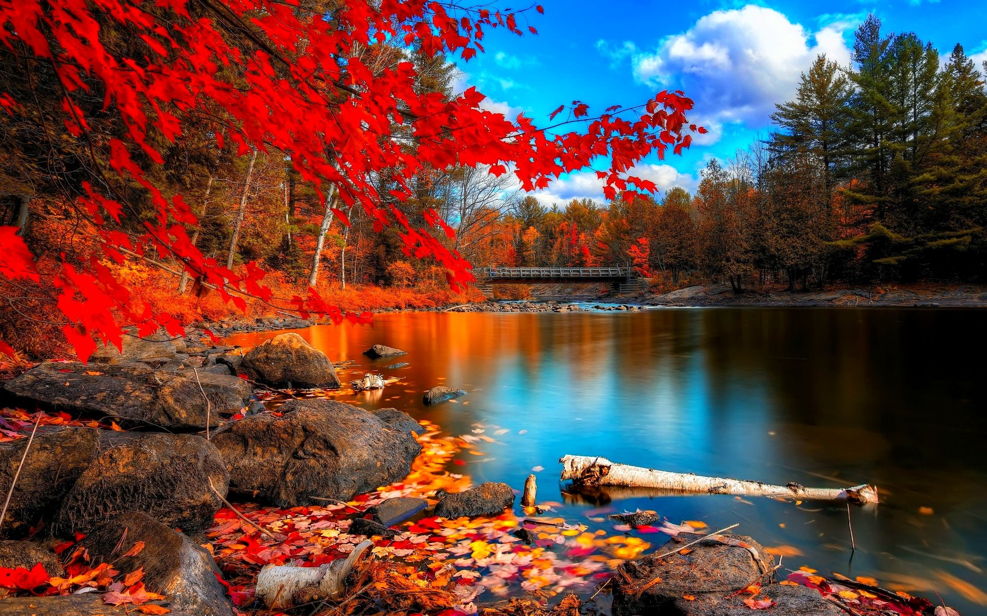 Autumn Colored Forest wallpapers